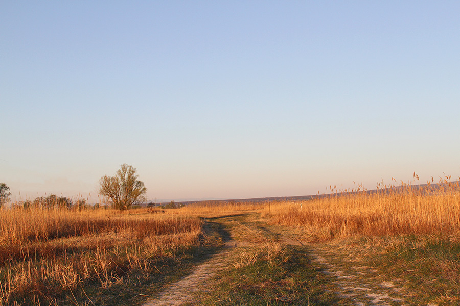 Reedmax Schilfschneidegebiet